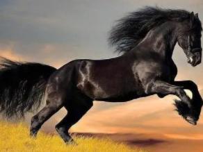 晚上睡觉的时候梦见自己被马追你知道代表什么吗?做这种好不好? 梦境解析,被马追,梦见被马追是什么意思