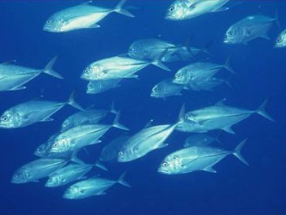 做梦梦到鱼繁殖了小鱼,这个梦境代表着啥 动物,梦到鱼,梦到鱼繁殖了小雨