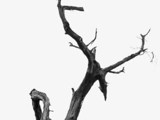 梦里面自己捡到了树枝,这个梦境说明着什么 植物,梦到树枝,梦到捡树枝的含义