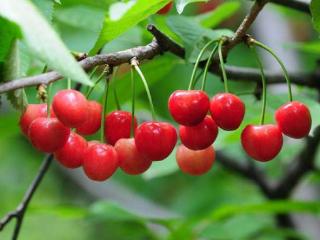 做梦梦到果树上面结满了水果,这个梦境是不是好运? 植物,梦到水果,梦到水果树结满水果