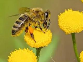梦到许多蜜蜂是什么意思?梦见蜜蜂咬我是什么暗示 动物,梦到许多蜜蜂,梦到许多蜜蜂什么意思