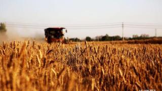 历时17天!河北省小麦大规模机收基本结束