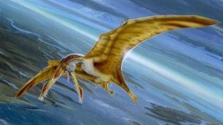 武直穿越时空打翼龙将是一场猎杀